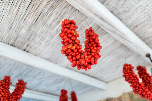 Fresh Cherry Tomatoes from Mallorca hanging from a wooden ceiling